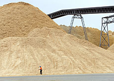 Woodchip can be used to produce a biofuel like ethanol