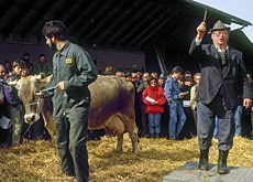 A livestock auction - the farming community's influence outweighs its relative size (RDB)