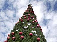 Wer Hat Den Tannenbaum Erfunden.Der Weihnachtsbaum Ist In Der Schweiz Erst Etwa 100 Jahre Alt Swi