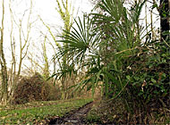 Exotic plants, like palm trees, have gained a foothold in canton Ticino