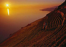 Those behind the bid wanted to strengthen Lavaux's international image and ensure its long-term protection