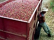 Mexico will benefit from the waiving of duty on products such as coffee