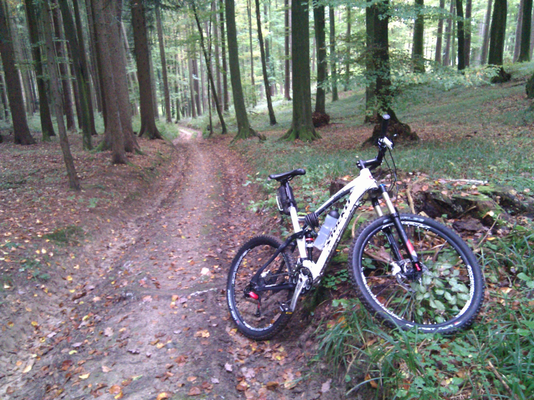 One of the wider trails in the forest. Others were overgrown single track with wet roots.