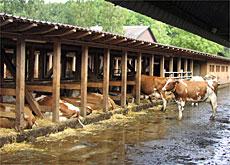 Minimalist Cowshed Helps Needy Farmers Swi Swissinfo Ch