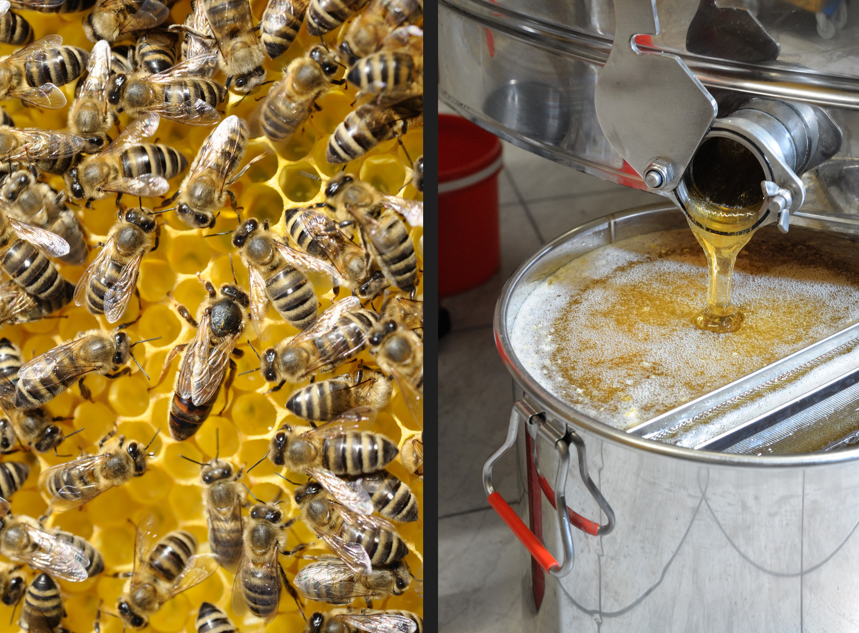 A queen surrounded by workers (left). Honey dripping from the centrifuge.