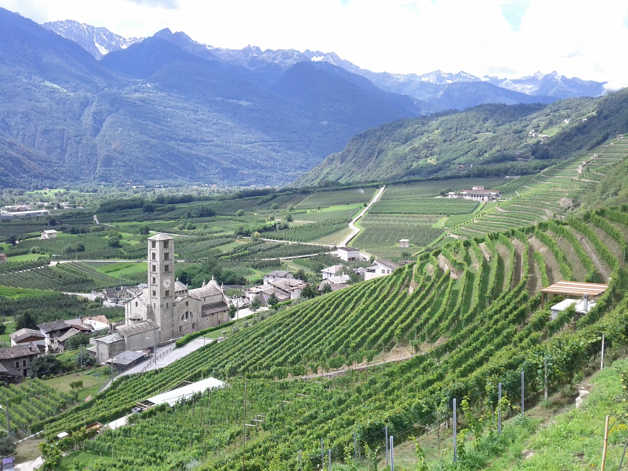 Vineyards above the church in Bianzone, showing the ongoing changeover from vertical to horizontal rows.