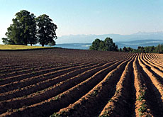 GM crops can now be grown in Switzerland under strict conditions