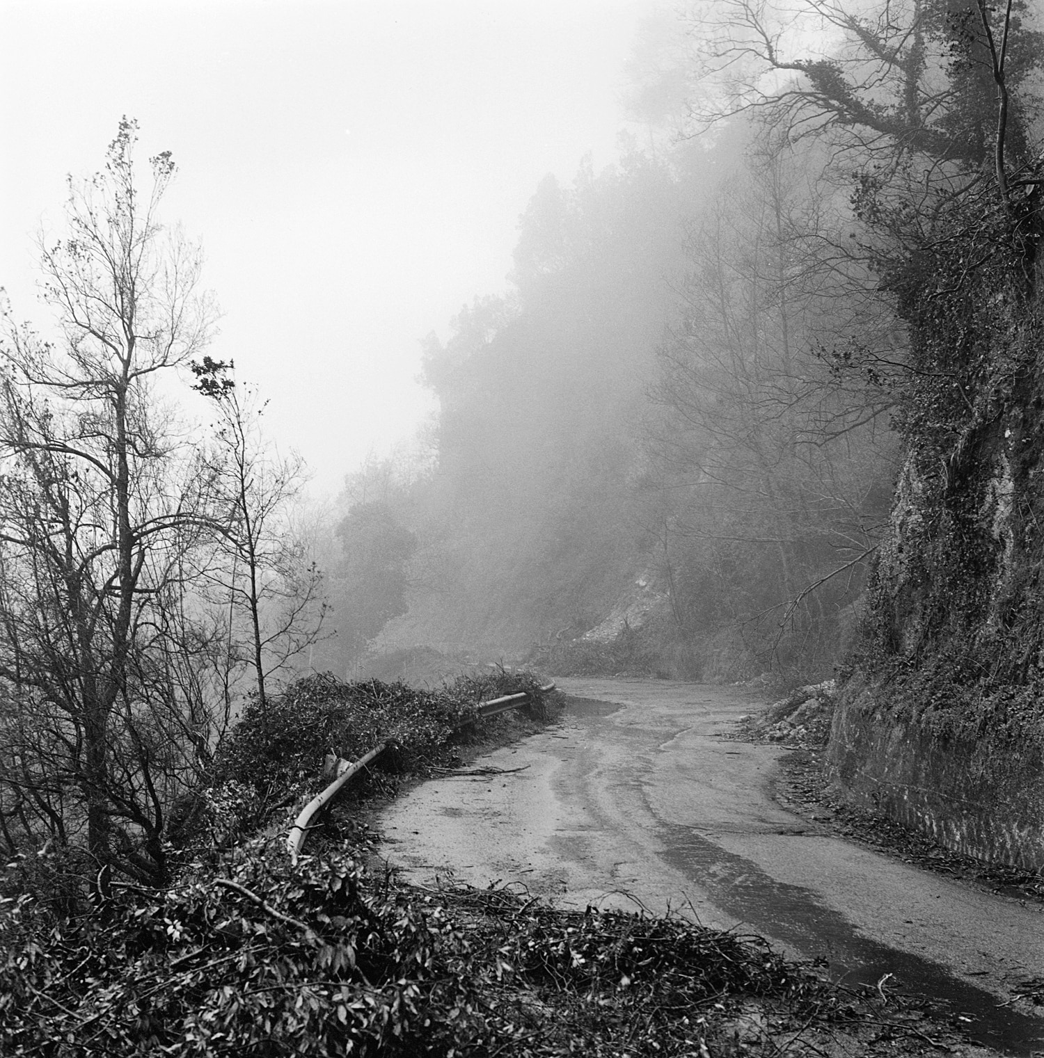 The road to the Aspromonte national park.