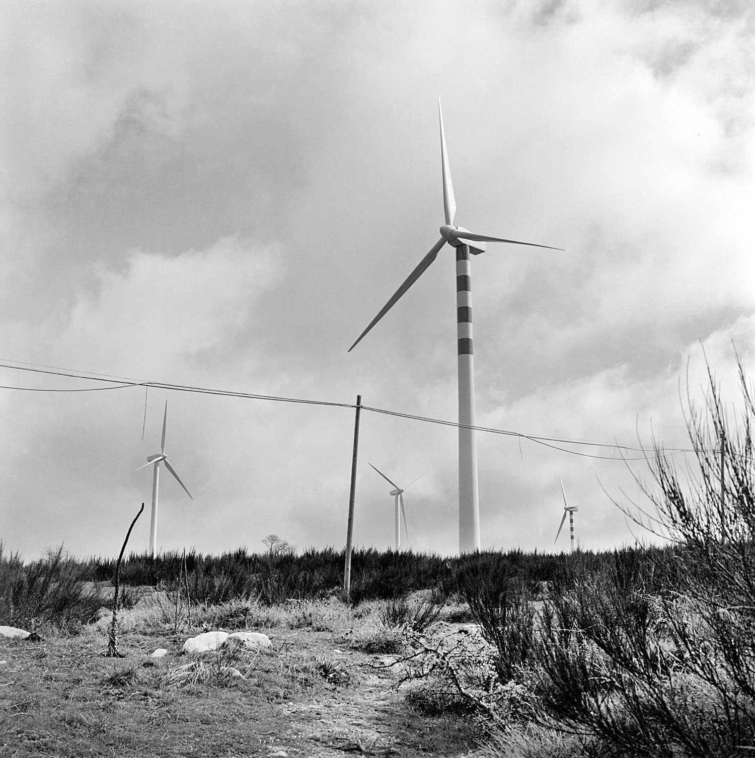 Wind farm located in the Aspromonte national park.