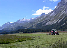 Farming in mountain areas has moved to zones with higher yields