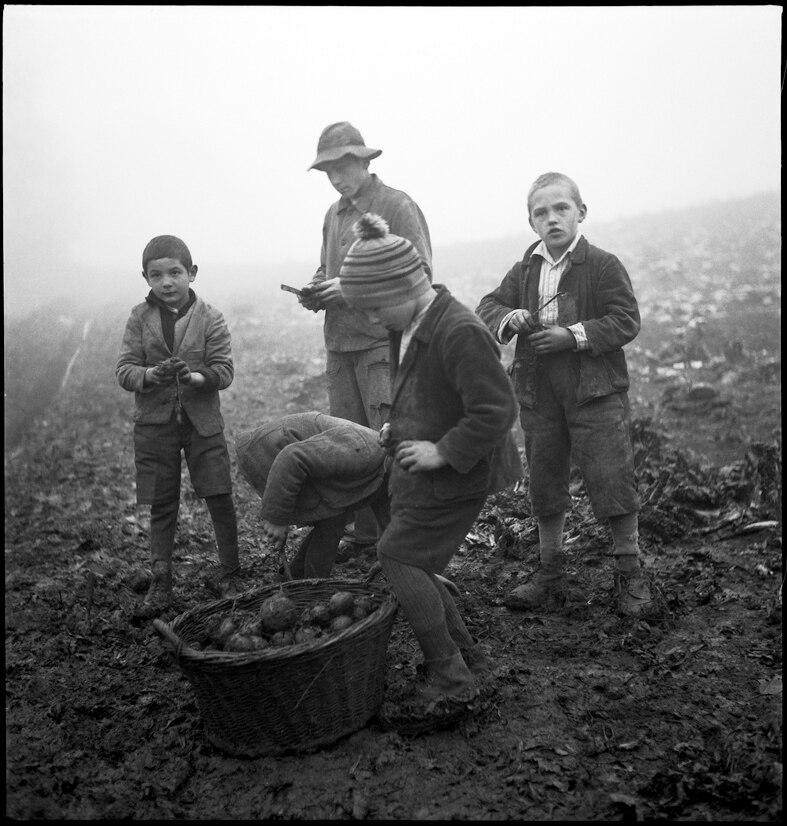 Knaben bei der Feldarbeit, Knabenerziehungsheim Oberbipp, Kanton Bern, 1940.