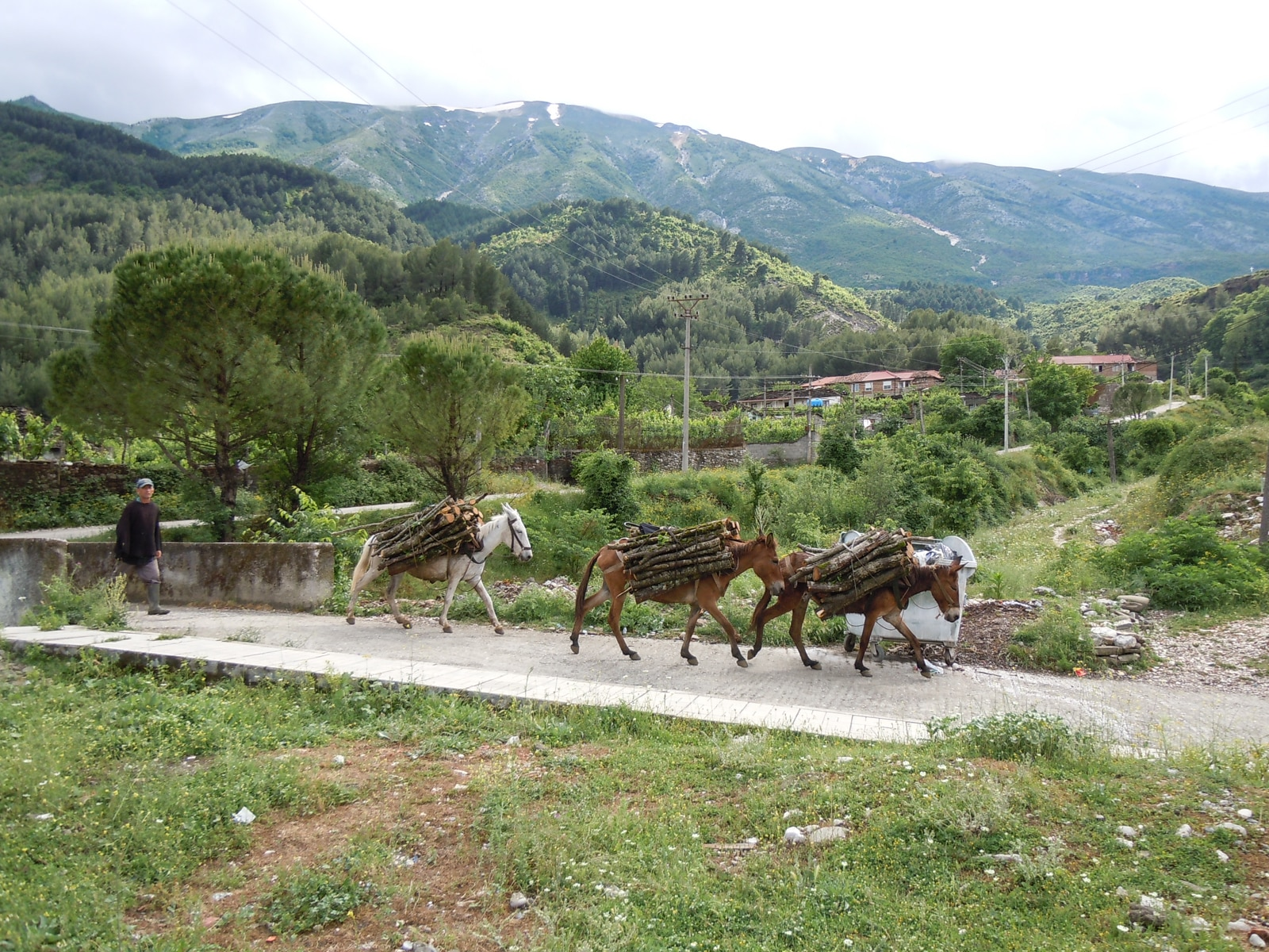 Përmet in southern Albania: donkeys and mules remain the usual way of getting around in the countryside