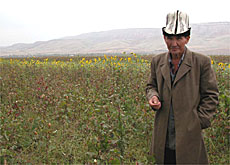 Kurbashev Mirzaakim, a farmer, next to the land he has planted with organic cotton