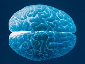 The human brain constantly rewires itself as we learn and remember