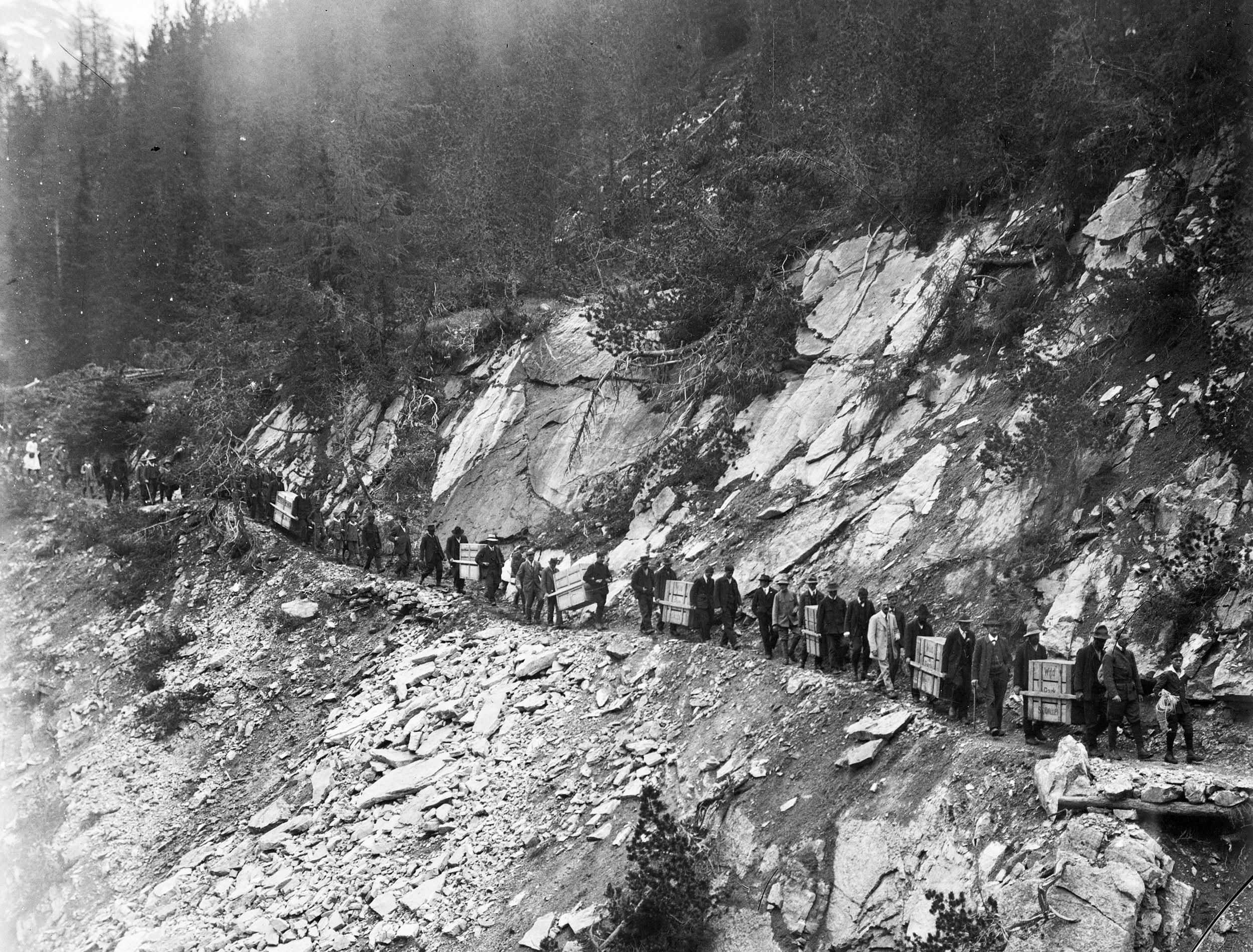 1920年山羊被带到了Piz Terza山,首先这些装着山羊的箱子必须被抬着穿过崎岖的山路。