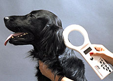 A special device reads the dog's microchip