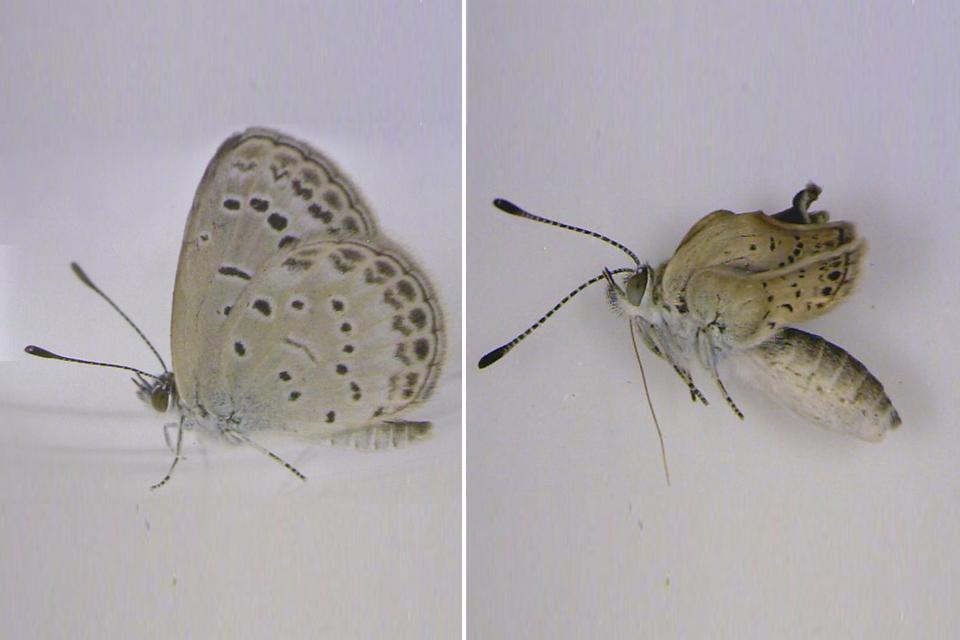 [Image: butterfly-jpg-data.jpg]