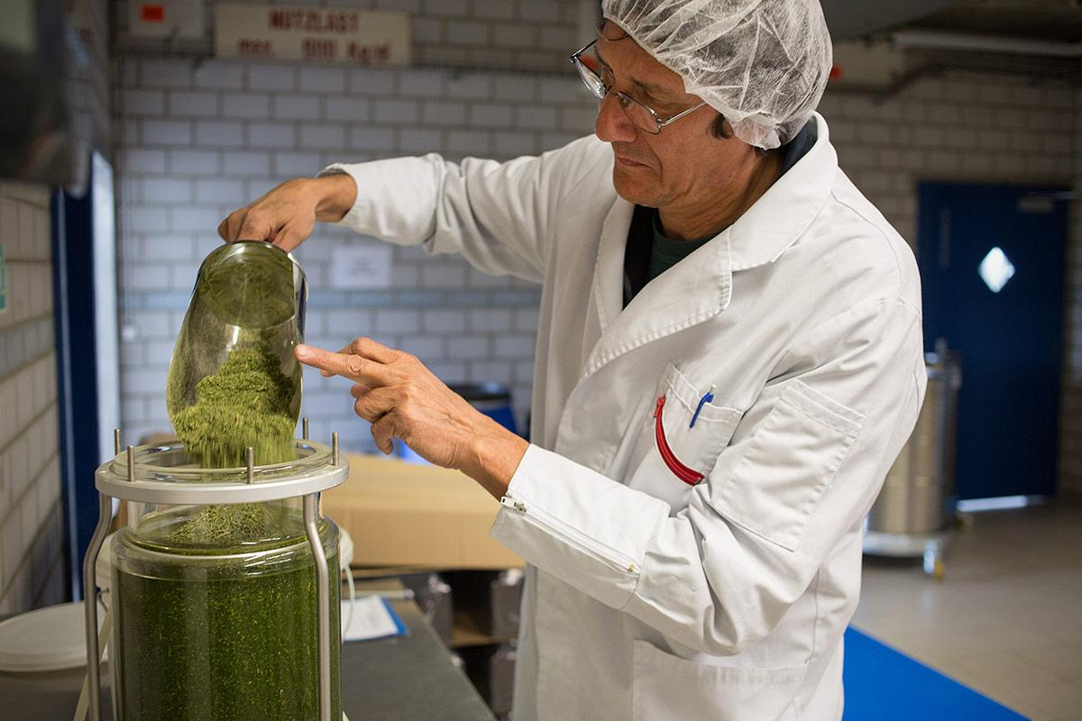 The cannabis flowers are poured into a 70% alcohol solution.