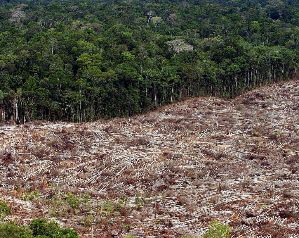 causes and solutions for deforestation in the amazon basin of south america In the amazon, industrial-scale cattle ranching and soybean production for world markets are increasingly important causes of deforestation, and in indonesia, the conversion of tropical forest to commercial palm tree plantations to produce bio-fuels for export is a major cause of deforestation on borneo and sumatra.