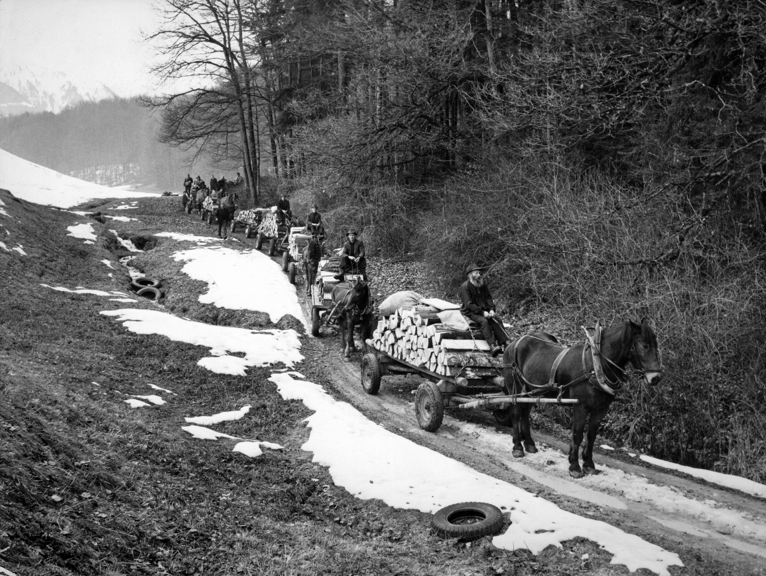 Swiss forestry workers once used horse-drawn carts to gather freshly cut wood