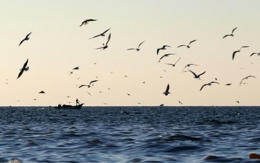 غرق مركب صيد يحمل 23 مصريًا في السودان