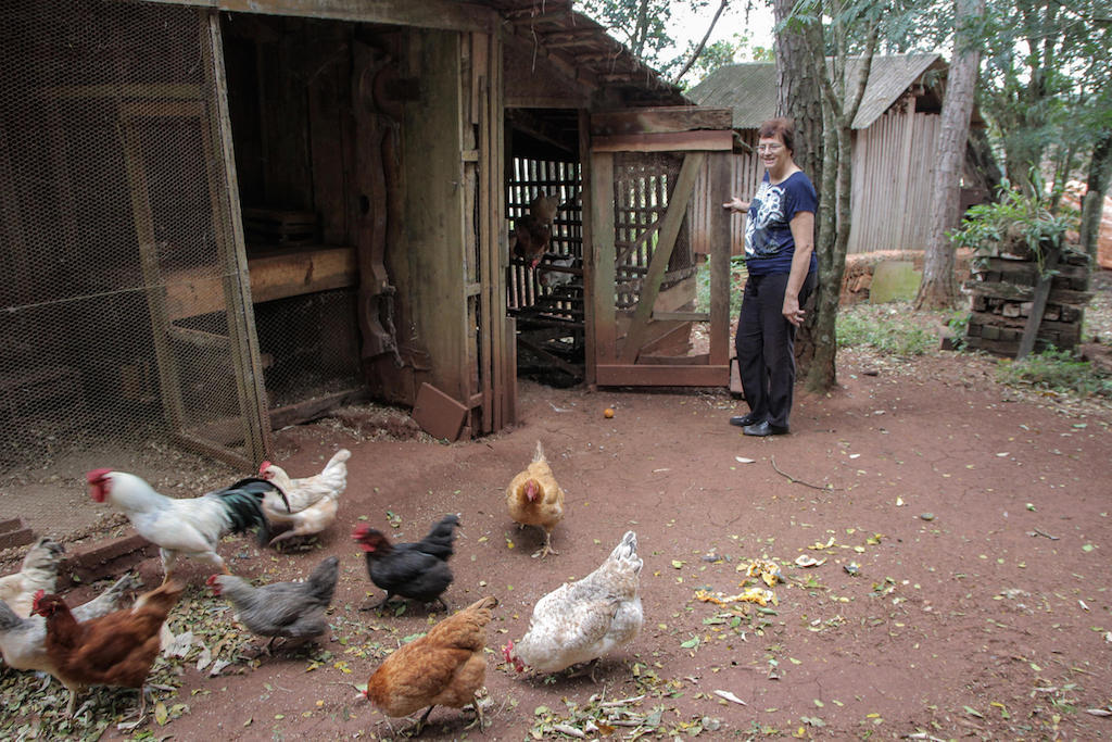 Raising chickens is another aspect of daily life.