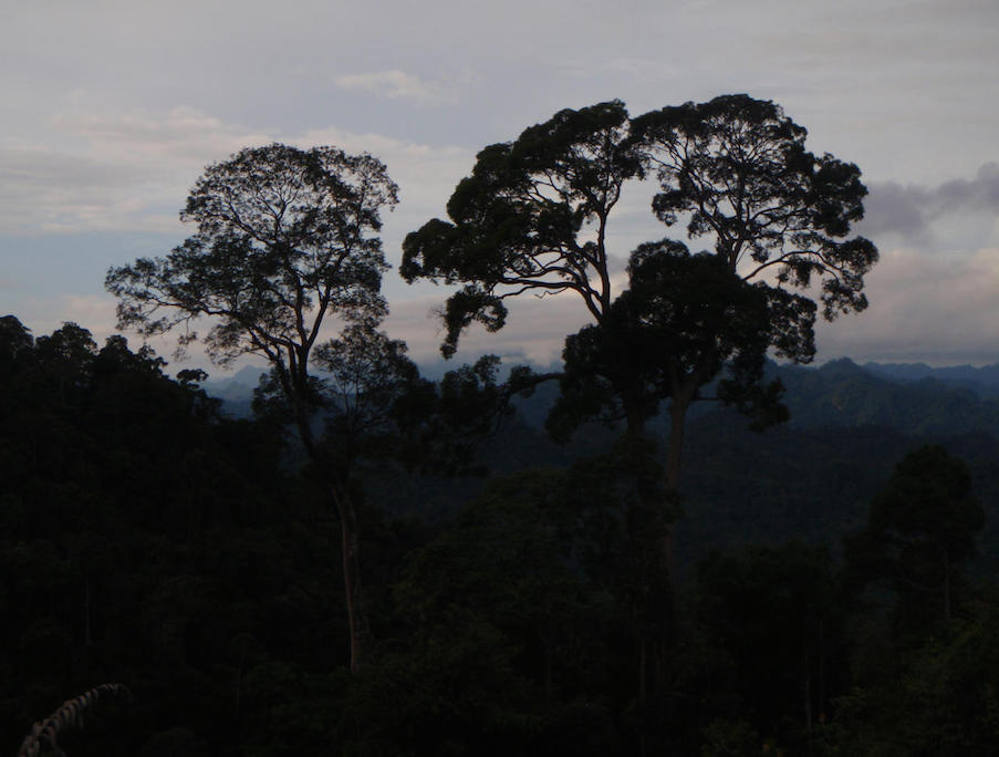 Twilight skies above the rainforest