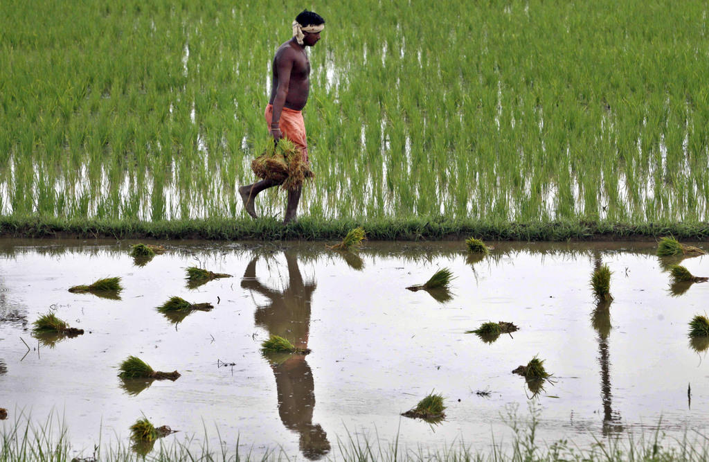 agriculture finance in india Farmer finance supports you using a whole farm approach - support in all aspects of agriculture our agriculture loans meet your both short term and long term credit needs.
