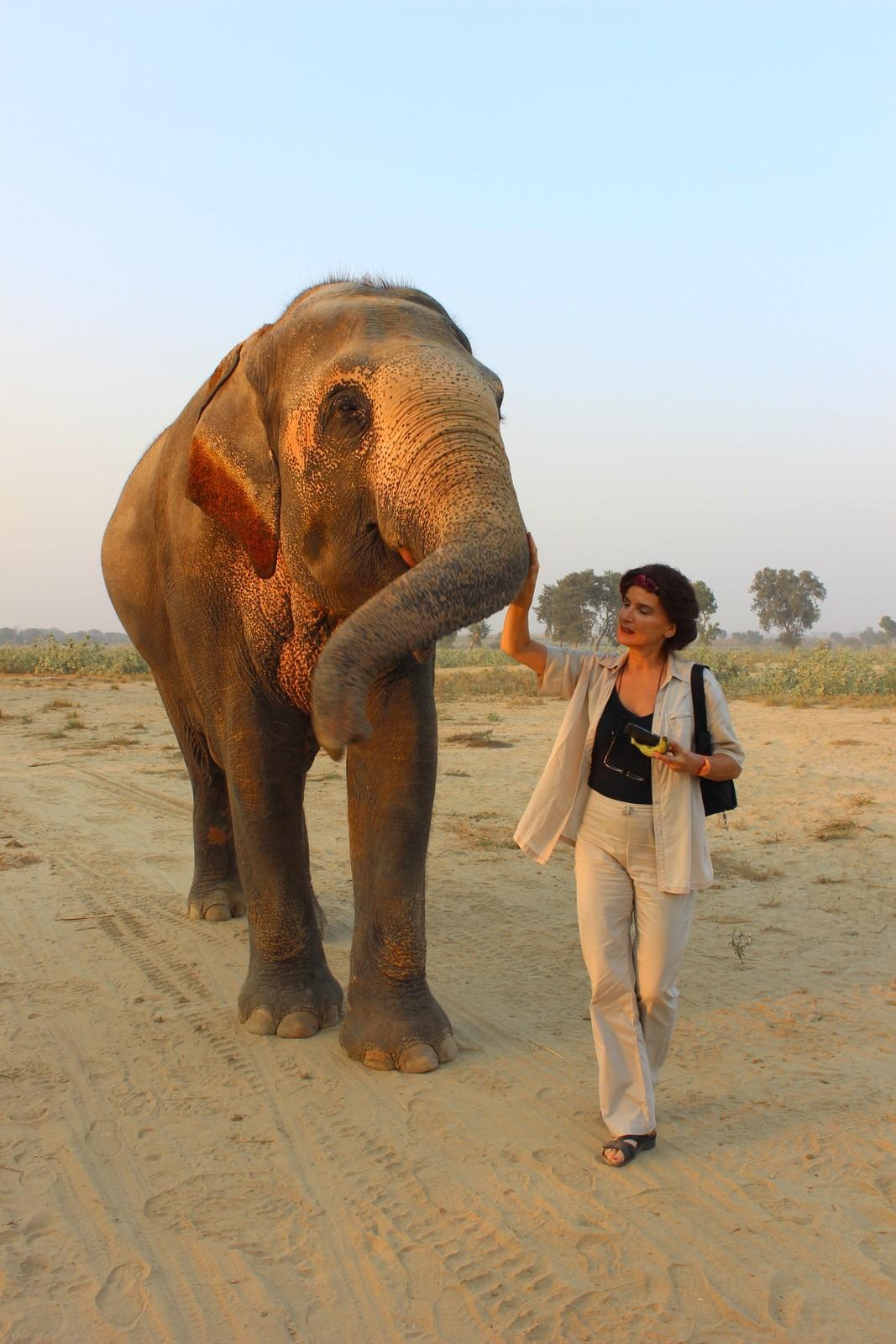 the dark side of the elephant ride business swi swissinfo ch