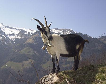 瑞士濒危珍稀动物