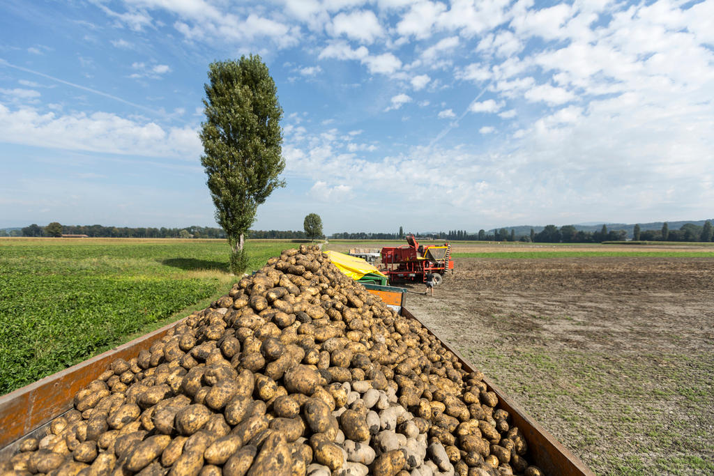 I privilegi dei contadini svizzeri: dal diesel sottocosto ai regali fiscali