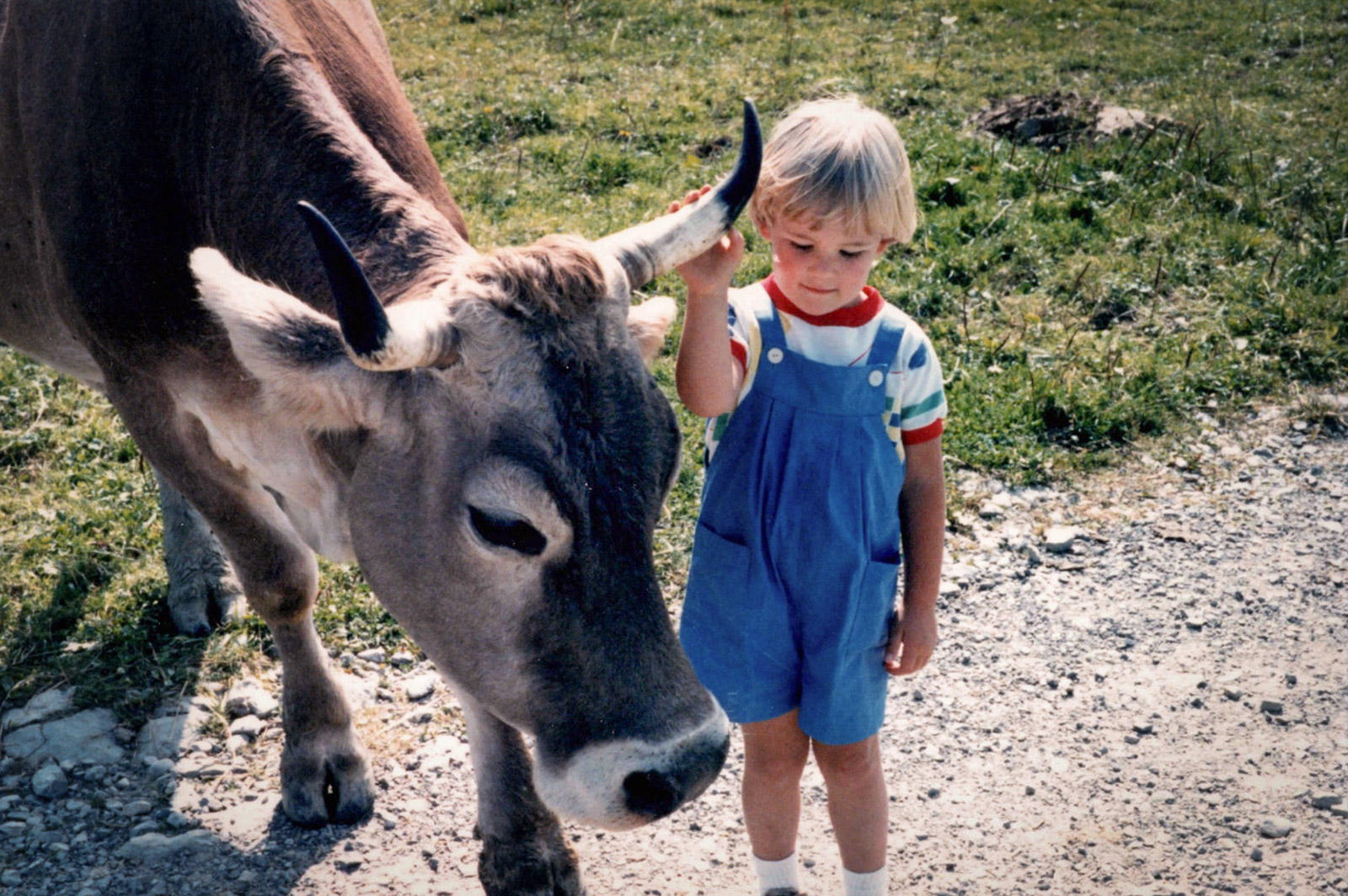 child who touches cowhorn