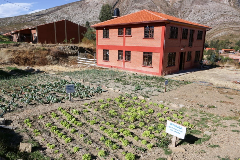 vegetable patch and school