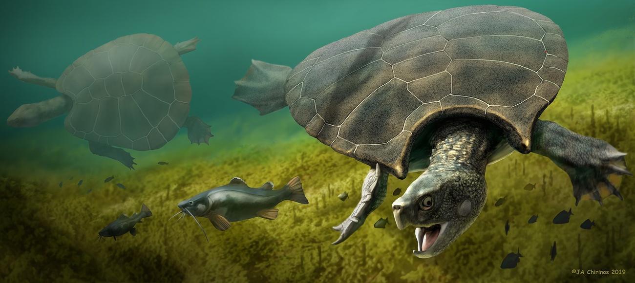 瑞士科学家发现迄今已知的世界上最巨型乌龟化石残骸