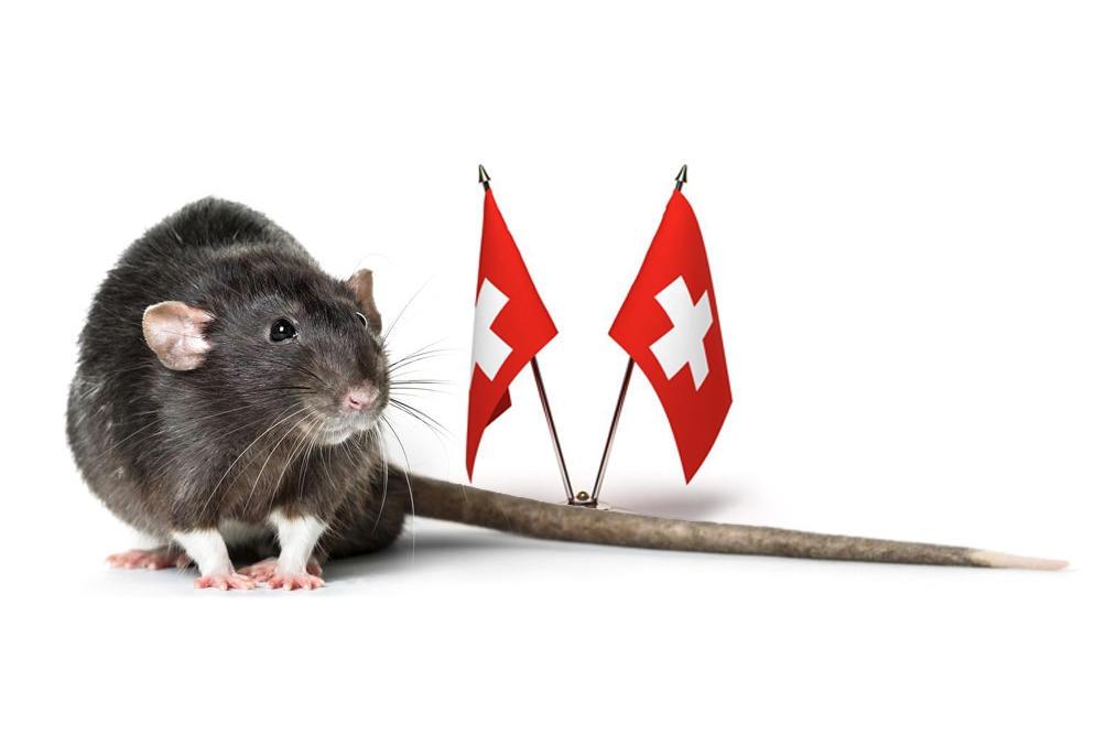 瑞士已经被老鼠占领了吗?