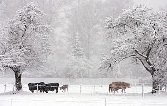 Wintereinbruch swi - Gartenarbeit im marz ...
