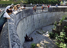 Tourists observe the bears in the current bear pits