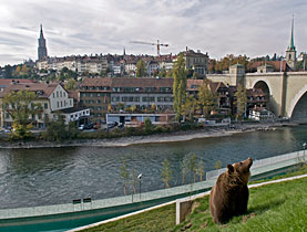 Bears get to enjoy wide open spaces in the new park along the River Aare
