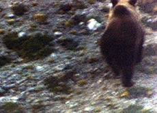 The bear was photographed on Thursday morning in the southeast of the country