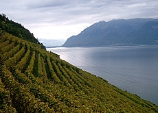 The Dubois vines sweep down to Lake Geneva