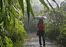 Artificial rain falls on visitors to the zoo rainforest