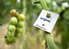 Syngenta says 60% of its corn and soybean seed has genetically modified traits