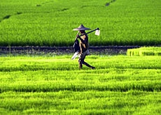 Poverty in some parts of Asia has been reduced by agricultural growth