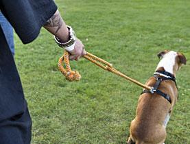 lista assicurazione cani obbligatoria