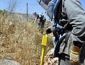 Probing the bushes near Harouf in southern Lebanon