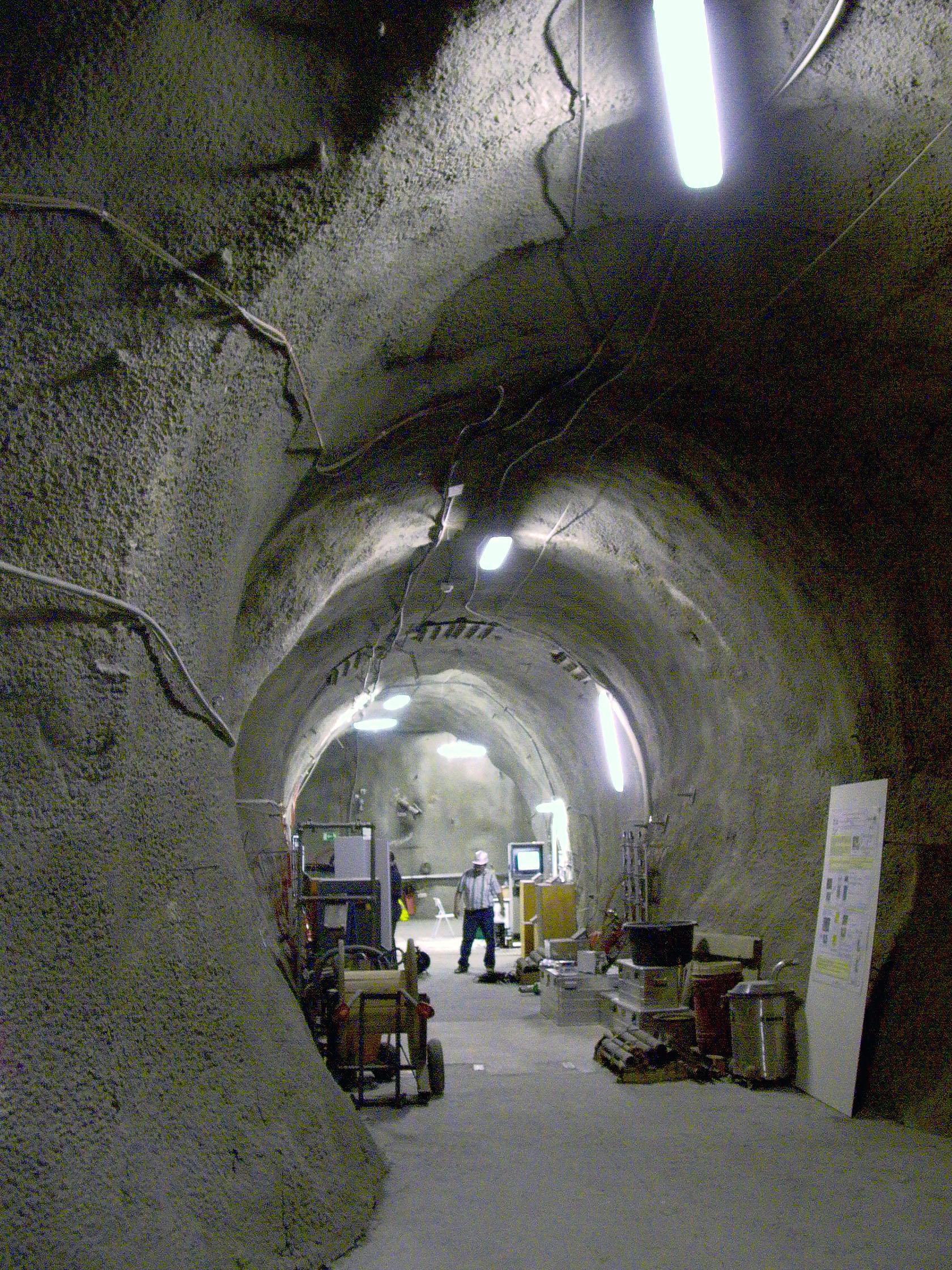 会在地下挖隧道的动物
