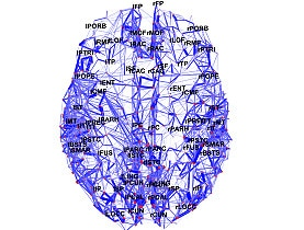 Scientists map brains wiring diagram SWI swissinfoch