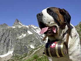 Barry the St Bernard: from farm dog to national hero - SWI swissinfo ch
