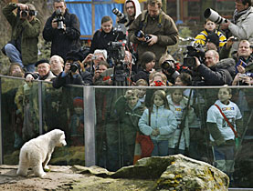 Knut, Berlin zoo's cute polar bear, made it big-time into the news