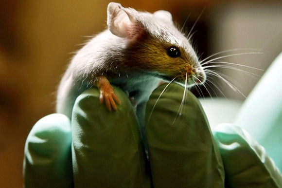 Animal testing remains controversial in Switzerland, as elsewhere